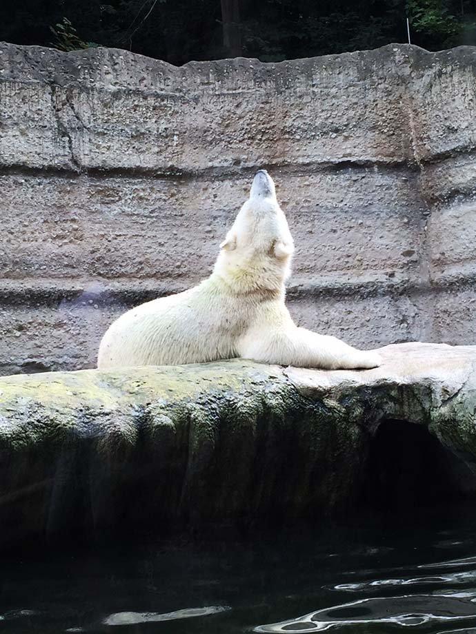 Cornet_Zoo_Erstes Date in München